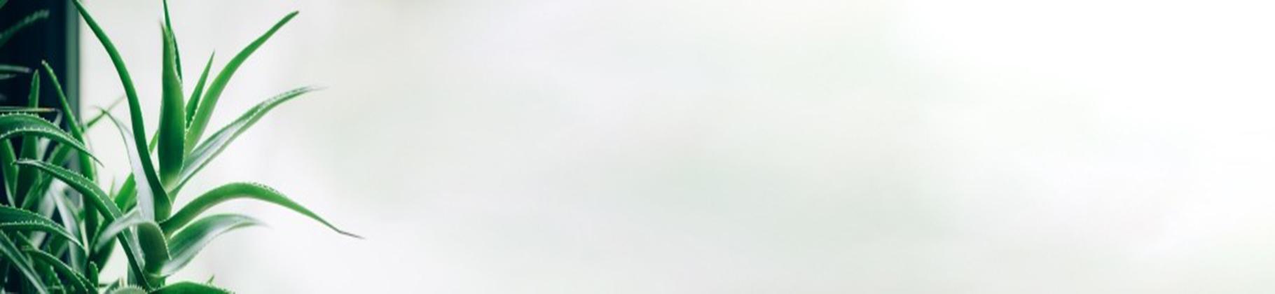▷ Comprar Aloe Vera Online - Allkauf